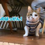 猫砂サッカーの名手エースと、砂スポンサーおむすび
