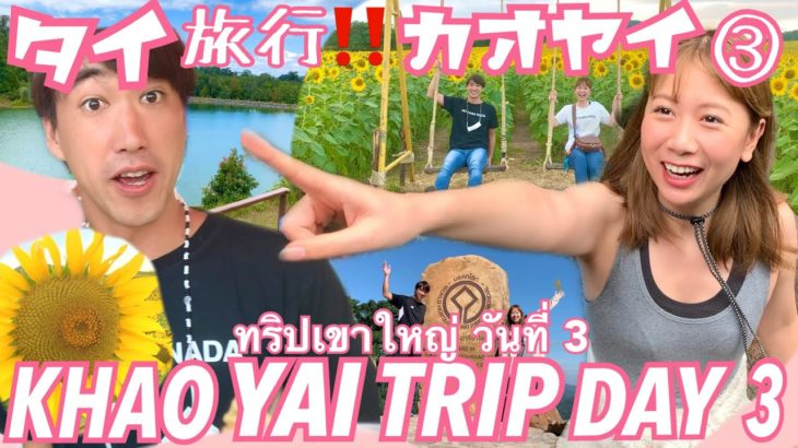 【subtitle】サッカー選手と嫁とタイ〈日常vlog#129〉カオヤイ旅行3日目💓ファイナル‼️世界自然遺産のカオヤイ国立公園✨どこまでも続く驚きのひまわり畑🌻