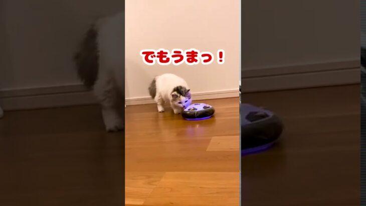 エアサッカーボールの上のちゅーるが食べたい猫【おしゃべりする猫】 #Shorts