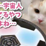エアサッカーボールをUFOと勘違いする猫【おしゃべりする猫】