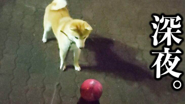 愛犬と夜中にサッカーしたらこうなりました…笑