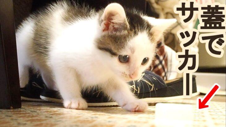 子猫がニャンリーグサッカーする!絶対に負けられない戦いがここにある!【赤ちゃん猫】【保護猫 子猫】