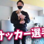 【コラボ】イケメンの元サッカー選手に捕まりまんざらでもない犬【トイプードルのコロン】