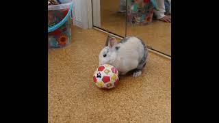 サッカーをするうさぎのベルちゃん