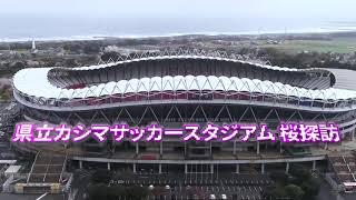 県立カシマサッカースタジアム 桜探訪