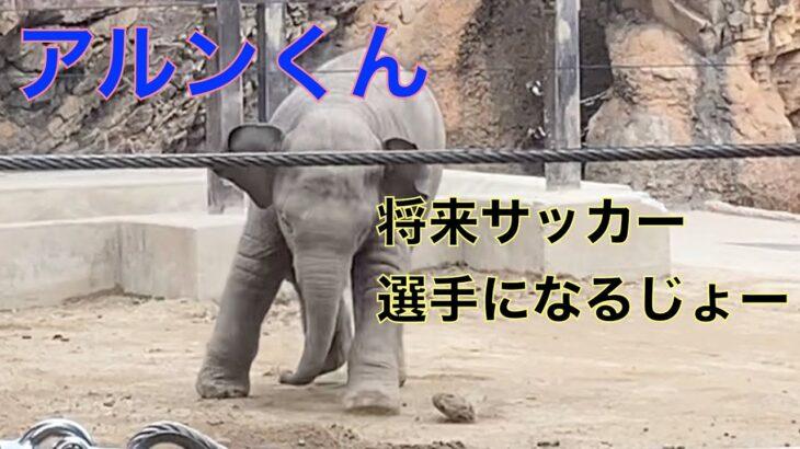 「将来サッカー選手になるじょー」アジアゾウの赤ちゃん・アルンくん 2021.09.14