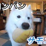 【サモエド】メロンパンサッカー【リク】