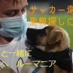 保護犬と一緒にピッチへ、サッカー選手が里親探しに協力 ルーマニア